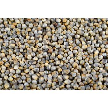 Pearl Millet - Nupur